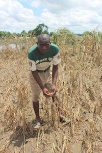 Farmer displaying his devastated crop