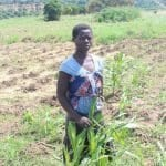 Fall Armyworm Hampers Malawi Farmers' Recovery Efforts