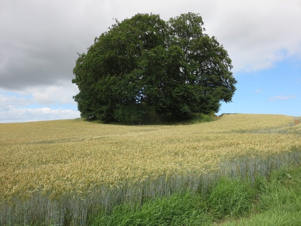 Tree on grassy hilltop