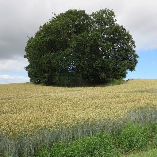 Tree on grassy hilltop