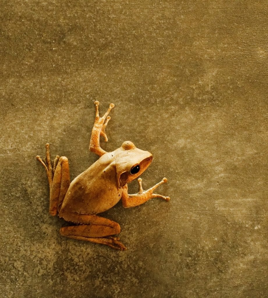 Frog on brown paper