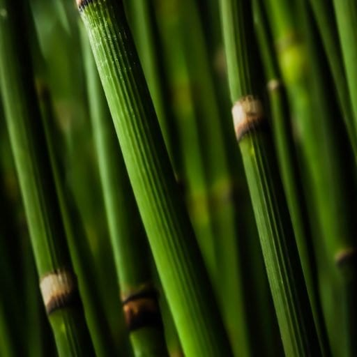 Macro Photography of Bamboo Branch
