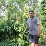Mekong coffee growers struggle with drought and heating climate