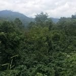 China and Vietnam need sustainable coffee farming
