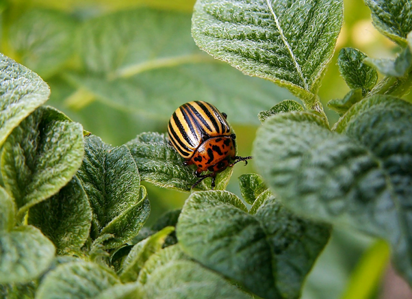 A ladybug, encouraging insects is one of the top reasons to grow organic