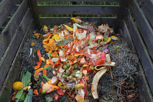 a compost bay, with kitchen scraps atop a pile of gardening clippings