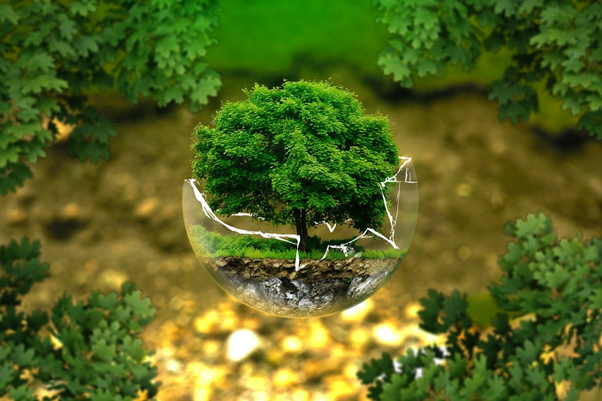 a tiny tree grows in a spherical terrarium