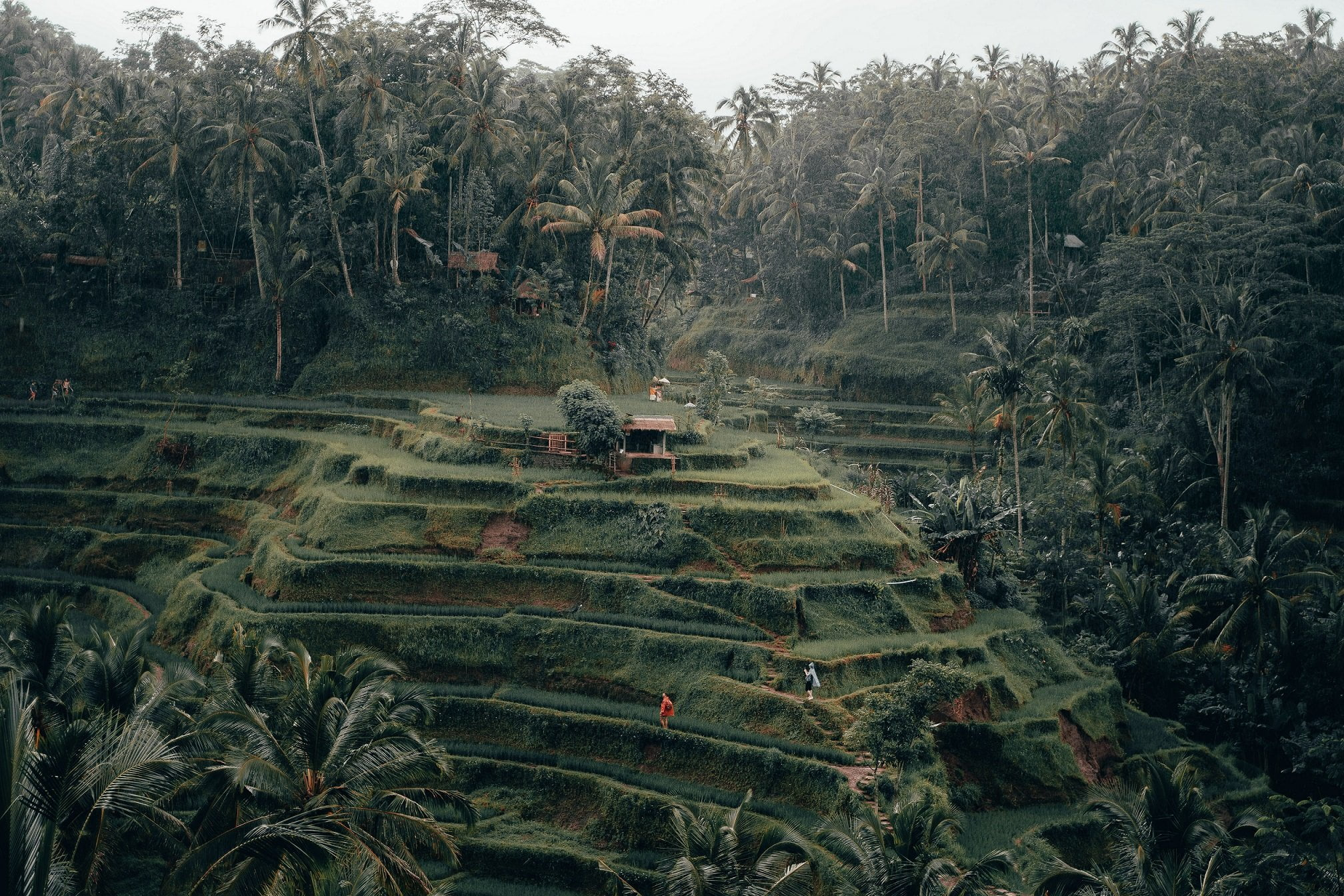 How to be a Better Bali Tourist