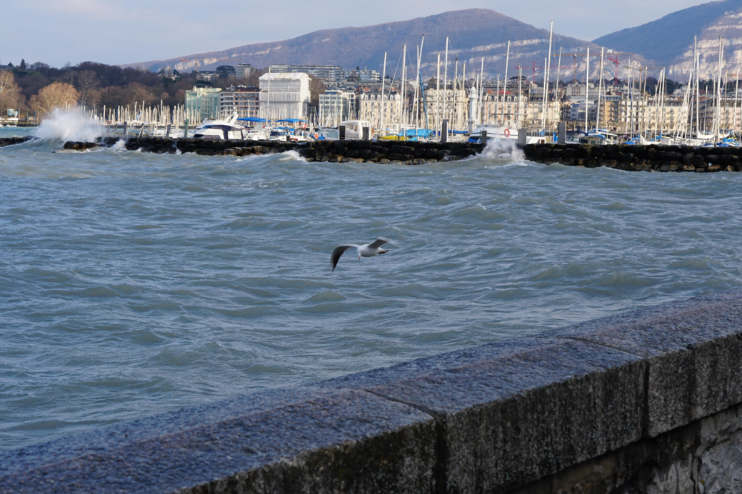ECOncrete: Sustainable Development For Battered Coastlines Revives Marine Life