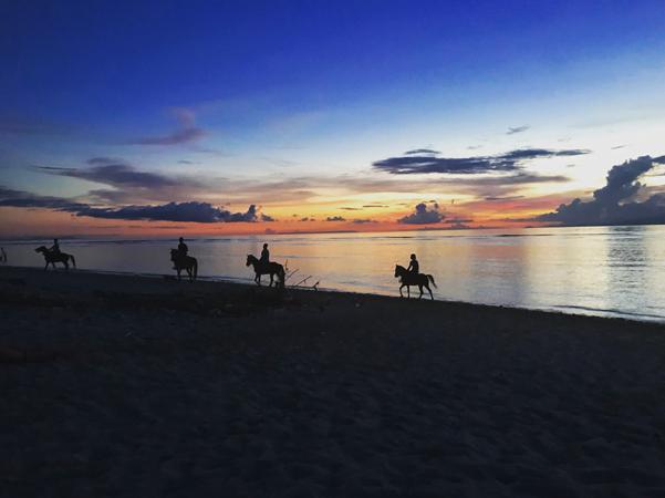 horses on beach at dusk
