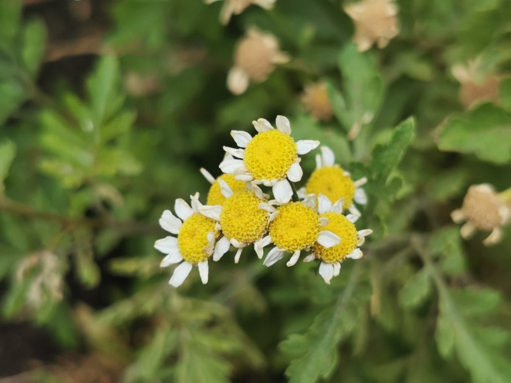 yellow flower with white petals