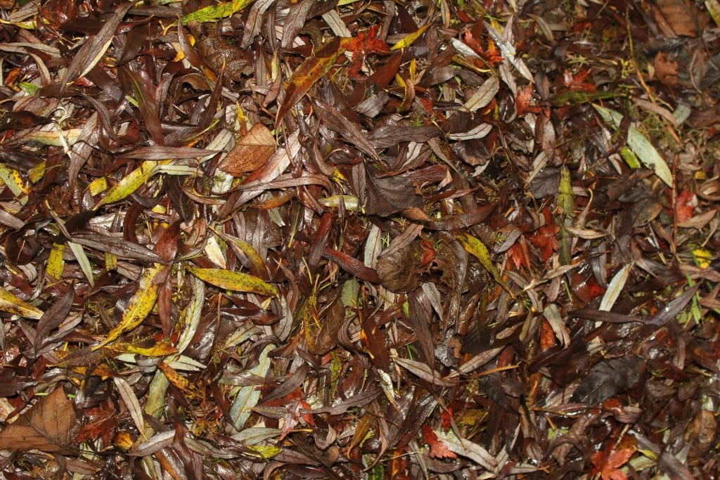 mass of partially-decomposed leaves