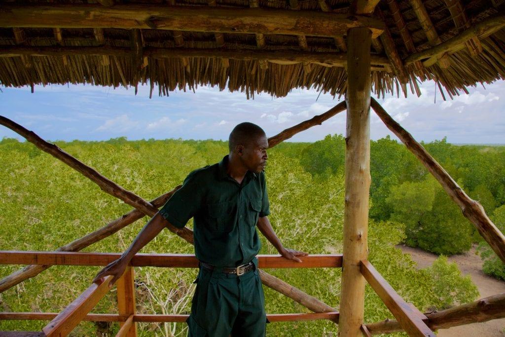 Forest ranger of one of Kenya`s mangrove forest