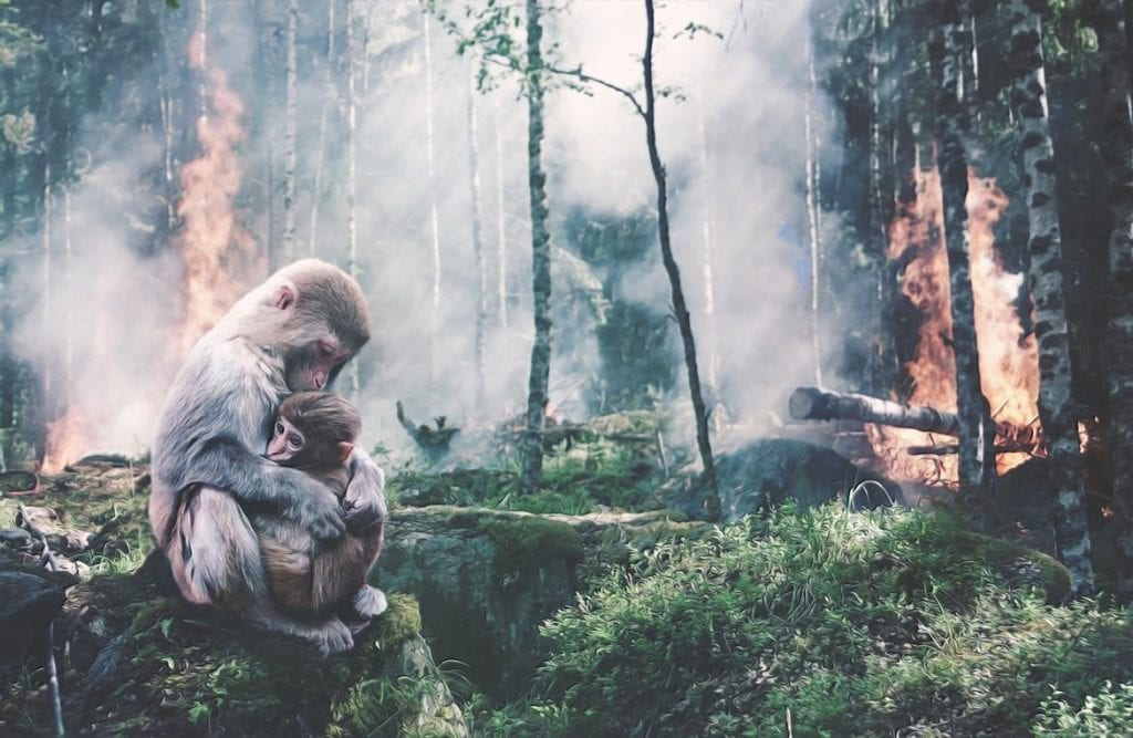 A mother primate holds her baby while the forest burns around them