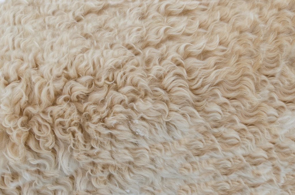 Wool up close, often used in sustainable activewear
