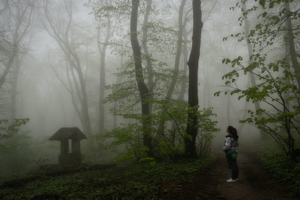 Misty forest, the lockdown in Serbia has been isolating