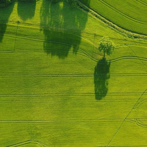 Bird's eye view of green fields