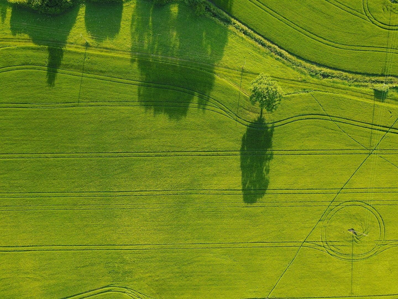 Bird's eye view of green fields
