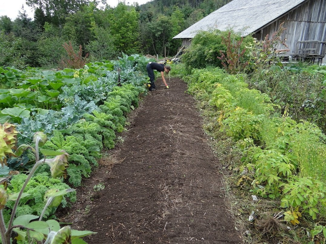 Mixed veg beds to promote growth in your garden