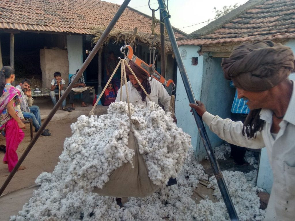 Farmer with cotton harvest