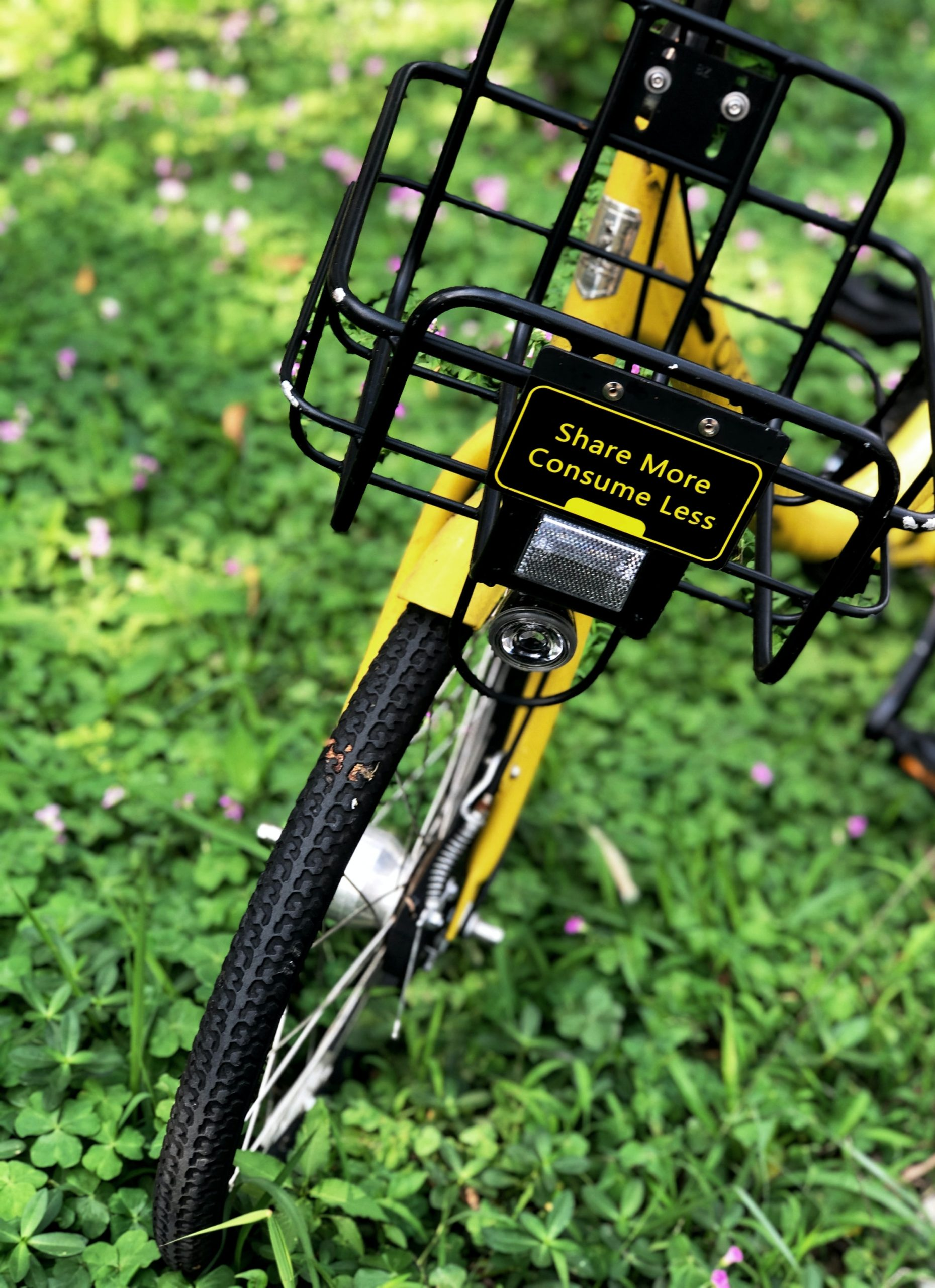 share bike on green grass