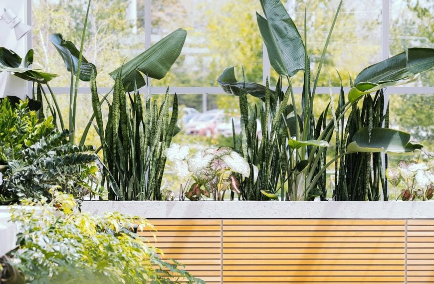 The Ultimate Guide To Finding The Best Indoor Plants For Clean Air