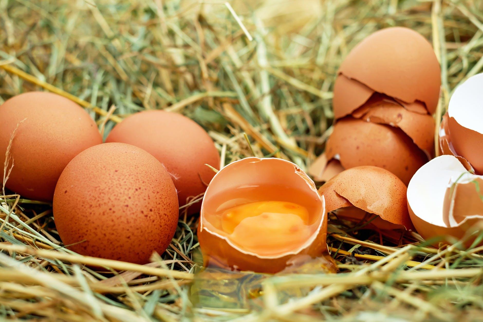 brown eggs in nest