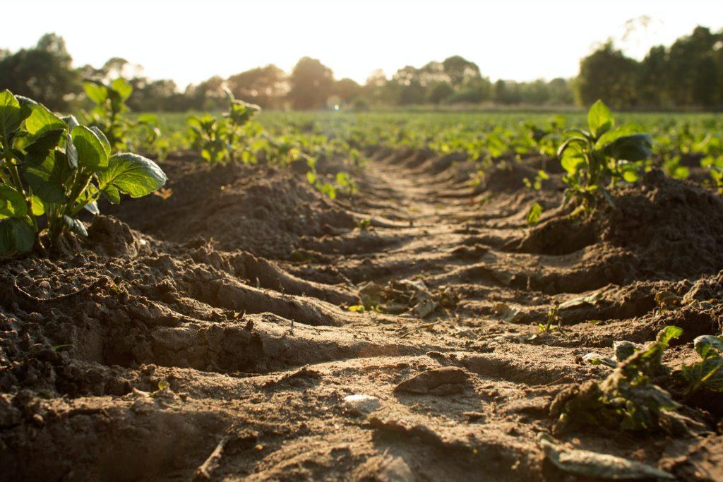 Disturbed soil in a farm
