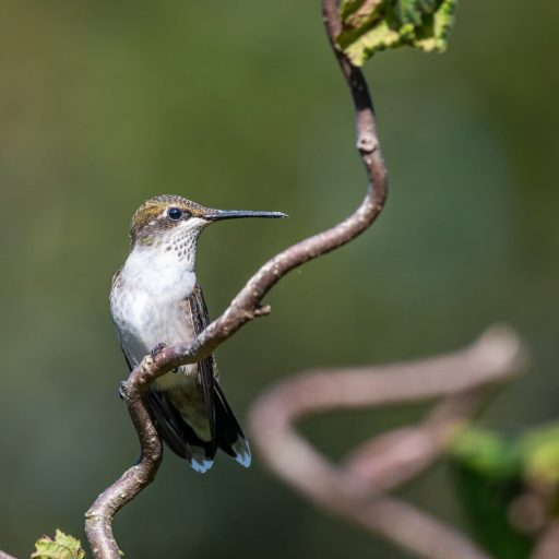 small hummingbird on plant in wildlife