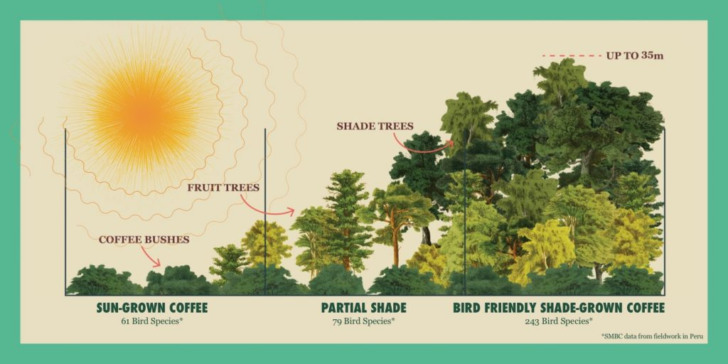 infographic showing different heights of tree canopy and listing number of bird species typically present