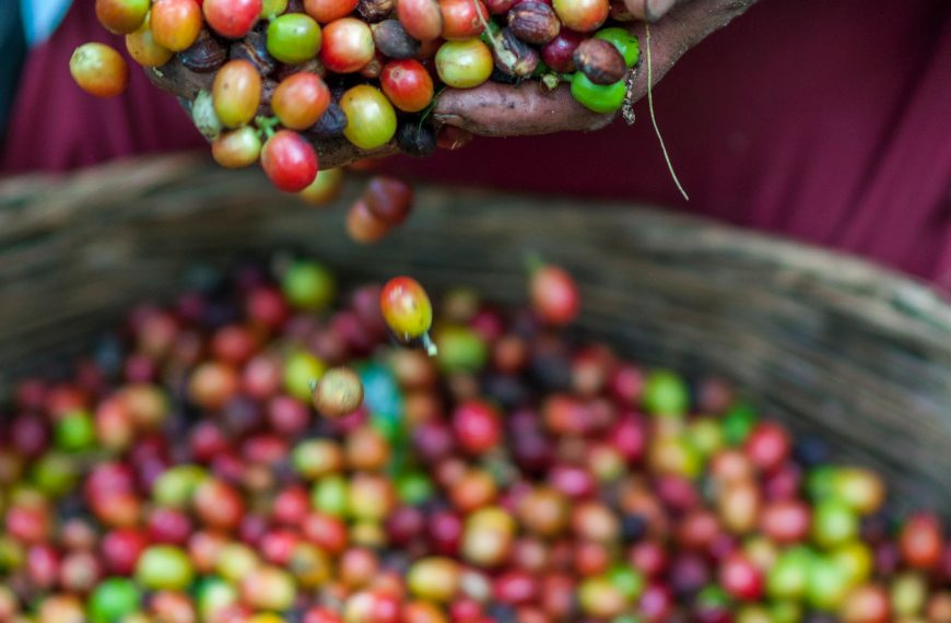 A Guide to Ethical, Sustainable, and Fair Trade Coffee Brands