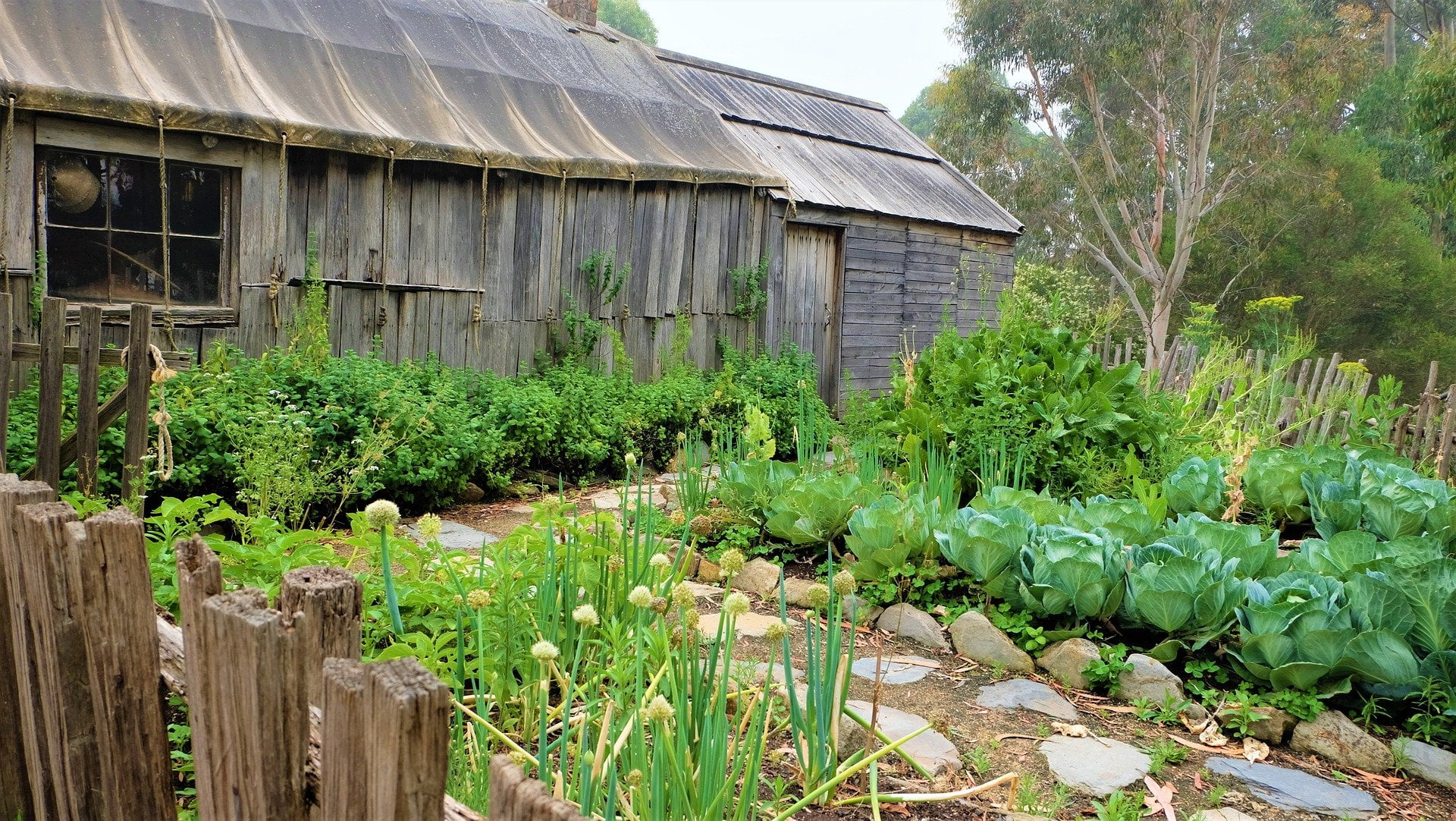 What Is Organic Gardening And Why Is It Important?