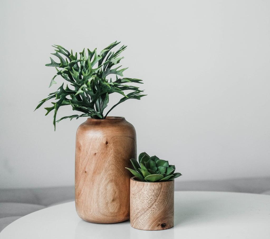indoor plants in wooden pots