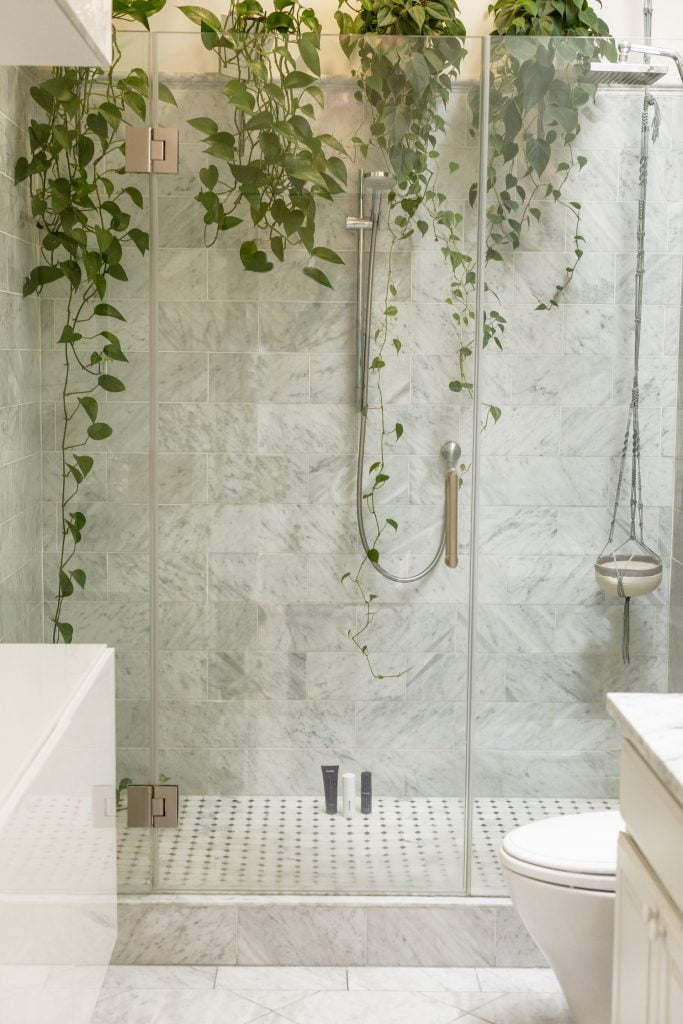 vines growing in glass shower