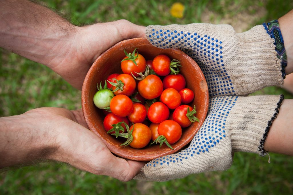 two people holing bowl of tomatoes