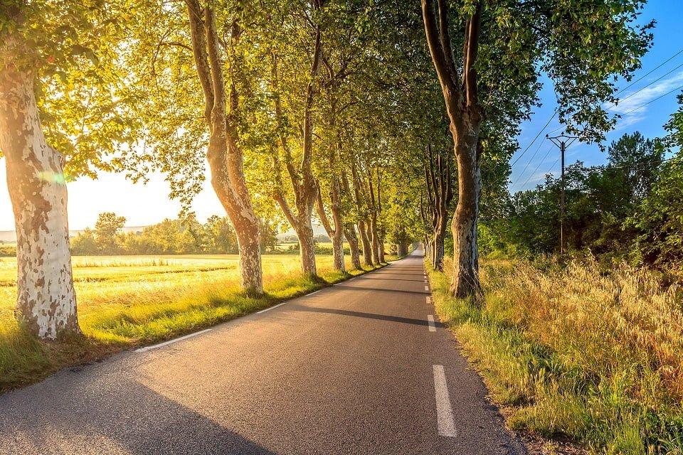 trees growing in road