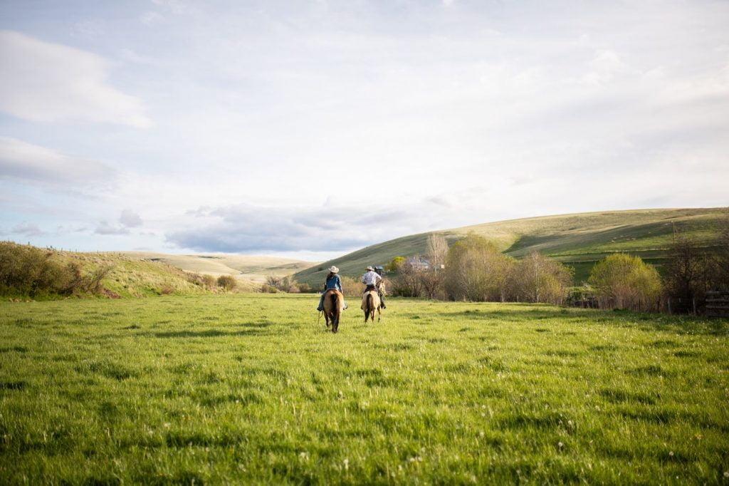two people on horseback in green field