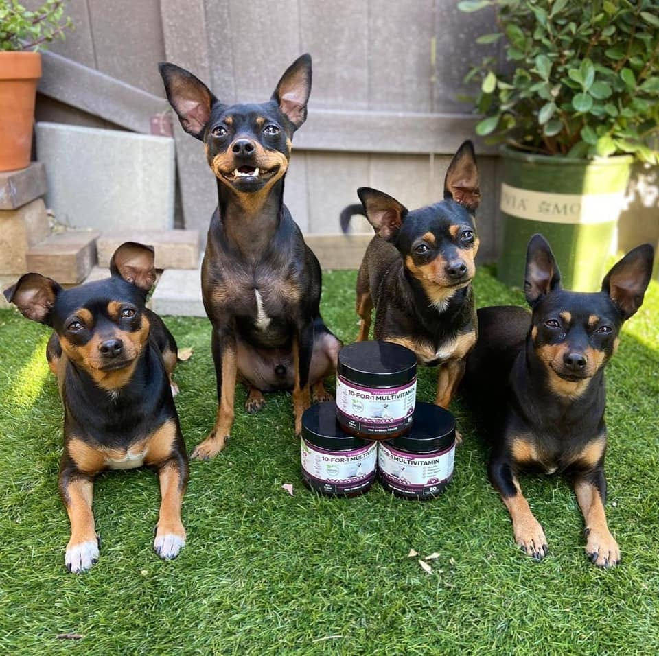 4 dogs sitting and lying down