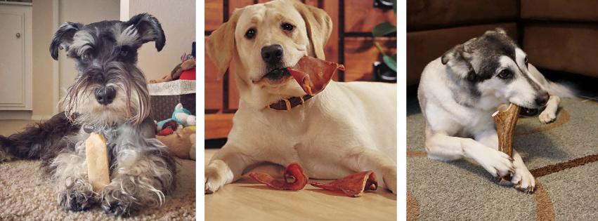 three dogs eating chews