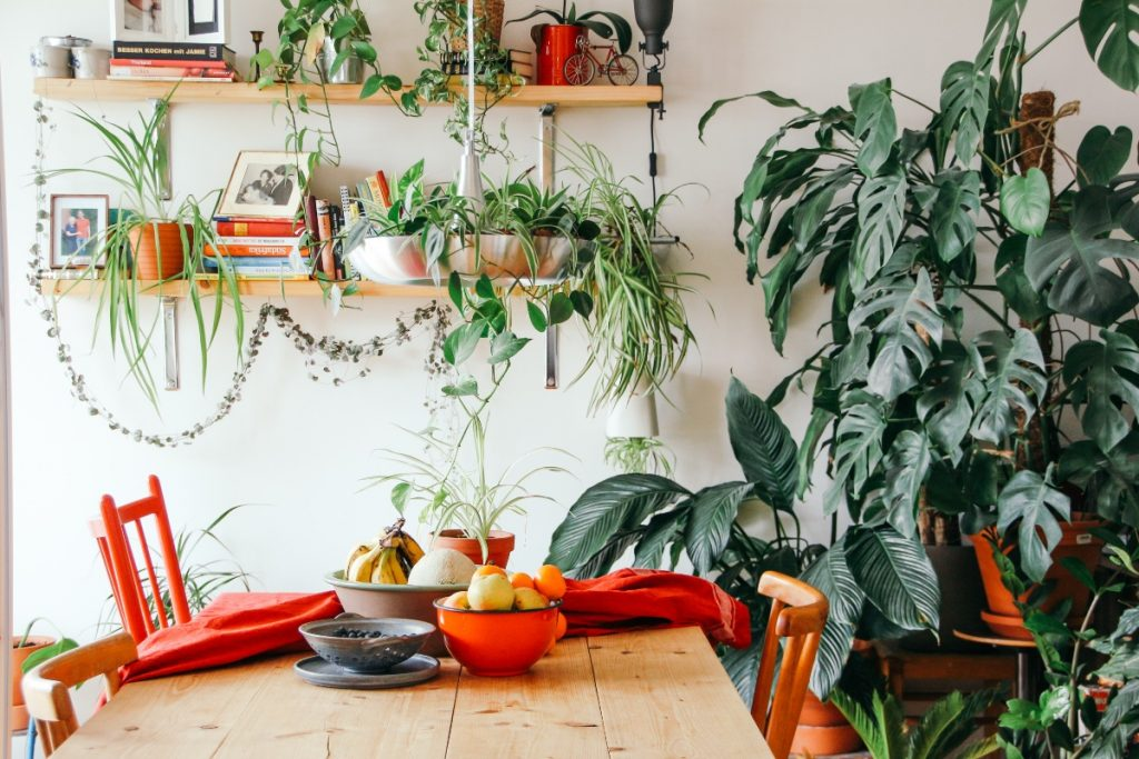 dining table and indoor plants