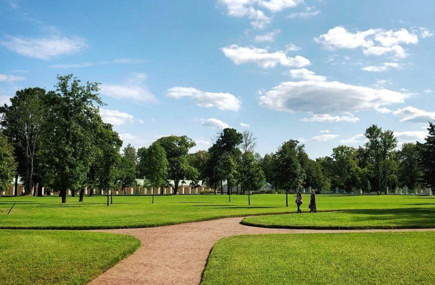 Eco-Friendly Alternatives to Grass Lawns