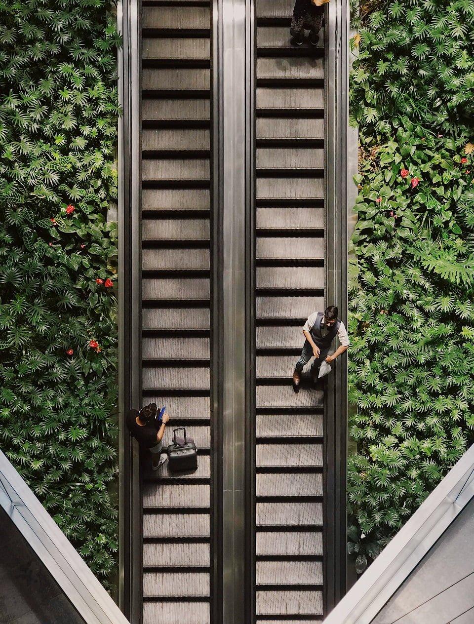 escalator and plants