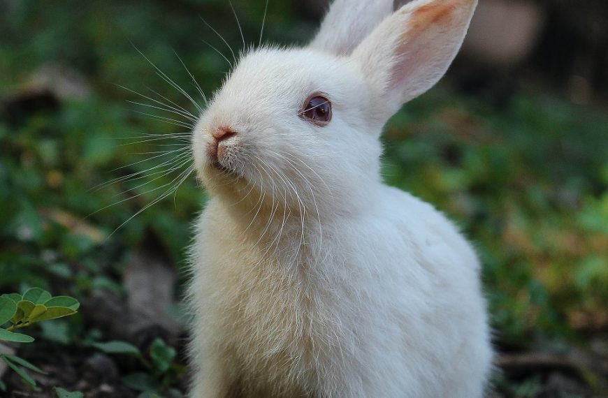 Everything You Need to Know about Animal Testing in the Beauty Industry