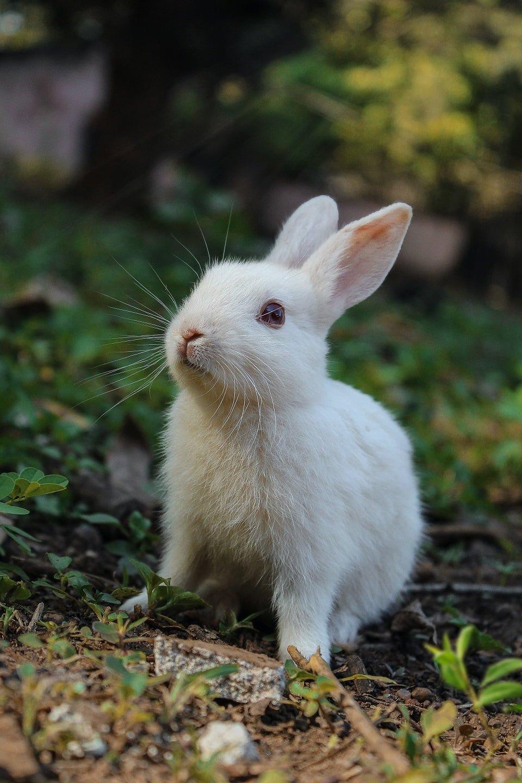 white bunny outside