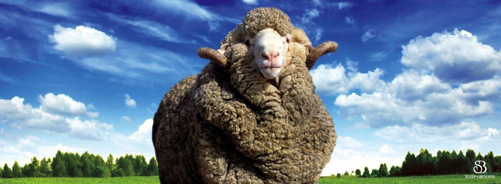Sheep in a green field under a blue sky